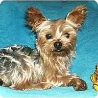 Adopt A Pet :: Zachariah - Mooy, AL
