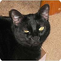 Adopt A Pet :: Sophia - Brea, CA