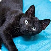 Adopt A Pet :: Todd - Chicago, IL