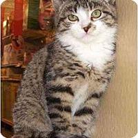 Adopt A Pet :: Green - Colmar, PA