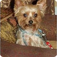 Adopt A Pet :: Carli - Charlotte, NC