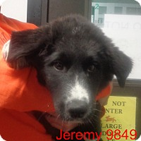 Adopt A Pet :: Jeremy - baltimore, MD