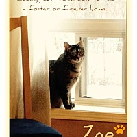 Adopt A Pet :: Zoe - Blackstock, ON