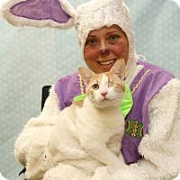 Adopt A Pet :: Ricky - Horsham, PA