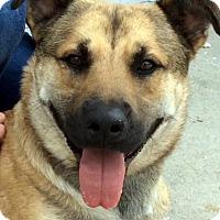 Adopt A Pet :: SHREVE (video) - Los Angeles, CA
