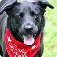 Adopt A Pet :: Lizzy - Miami, FL