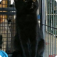 Adopt A Pet :: Black Pearl - Caistor Centre, ON