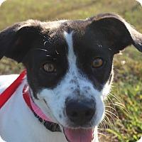 Adopt A Pet :: Lydia - Waldorf, MD