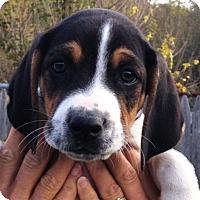 Adopt A Pet :: Boyd - Pleasant Plain, OH