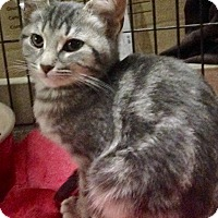 Adopt A Pet :: Cate - East Brunswick, NJ