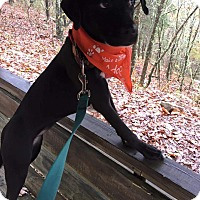Adopt A Pet :: Remy - Homewood, AL