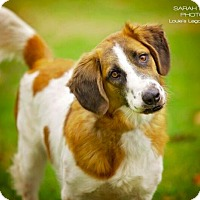 Adopt A Pet :: Carter - Cincinnati, OH