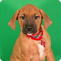 Adopt A Pet :: Cady - Berkeley Heights, NJ