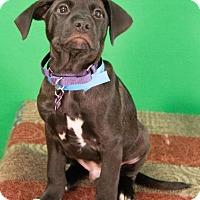Adopt A Pet :: Dodge - Berkeley Heights, NJ