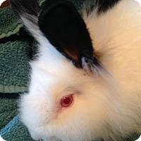 Adopt A Pet :: Sherlock - Conshohocken, PA