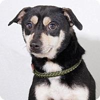 Adopt A Pet :: Fraggle - Sudbury, MA