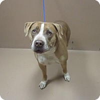 Adopt A Pet :: ROSCO - Reno, NV