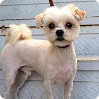 Adopt A Pet :: Gumdrop - Los Angeles, CA