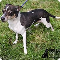 Adopt A Pet :: MISSY - Sandusky, OH