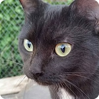 Adopt A Pet :: Shadow - Barrie, ON