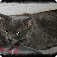 Adopt A Pet :: Jade - Shippenville, PA