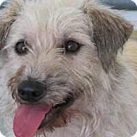 Adopt A Pet :: JP - Memphis, TN