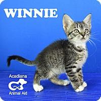 Adopt A Pet :: Winnie - Carencro, LA