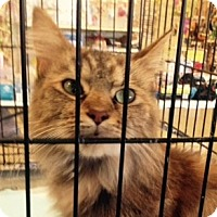 Adopt A Pet :: Crystal - Germantown, MD