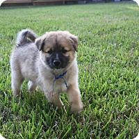 Adopt A Pet :: Roman - Friendswood, TX
