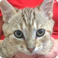 Adopt A Pet :: Stills - Sarasota, FL