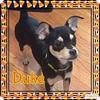 Adopt A Pet :: Duke - Enid, OK