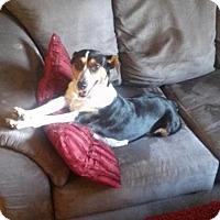 Adopt A Pet :: Julia - Sanford, FL