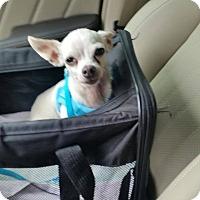 Adopt A Pet :: Leche - San Antonio, TX