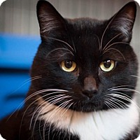 Adopt A Pet :: Pedro Demure - Edmonton, AB