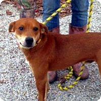 Adopt A Pet :: James - Westwood, NJ