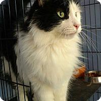 Adopt A Pet :: Liberty - Brookings, SD