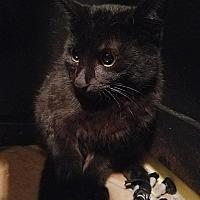 Adopt A Pet :: Orion - Tampa, FL
