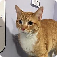 Adopt A Pet :: Midas - Sherwood, OR