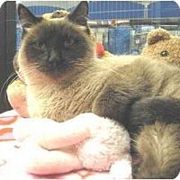 Adopt A Pet :: Oreo - Mesa, AZ