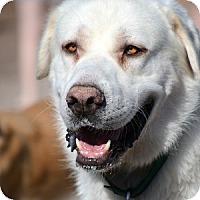Adopt A Pet :: Kosmas - Phoenix, AZ