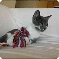 Adopt A Pet :: Trenton - Davis, CA