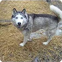 Adopt A Pet :: Bebe - Belleville, MI