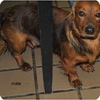 Adopt A Pet :: Donald - New Boston, NH