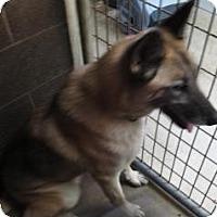 Adopt A Pet :: Carolina*ADOPTED!* - Chicago, IL