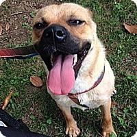 Adopt A Pet :: Teddie - Pine Grove, PA