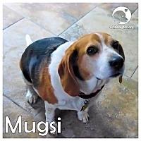 Adopt A Pet :: Mugsi - Novi, MI