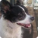 Adopt A Pet :: Joy Pap
