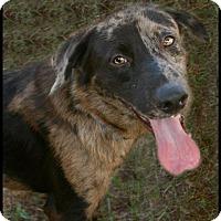 Adopt A Pet :: Miles - Lufkin, TX