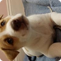 Adopt A Pet :: Korie - Mechanicsburg, PA