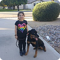 Adopt A Pet :: Whitaker - Gilbert, AZ